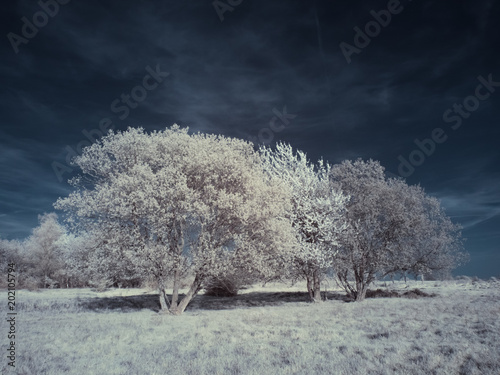 infrared photography - ir photo of landscape under sky with clouds