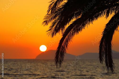 Plexiglas Zee zonsondergang Summer sunset, exotic scene with palm silhouettes and sun on horizon, Island Lokrum near Dubrovnik, Croatia