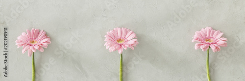 Three pink fresh flowers placed separately on bright grey wall
