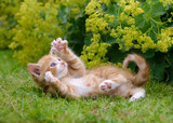 Cute kitten playing in a flowery garden © kathomenden