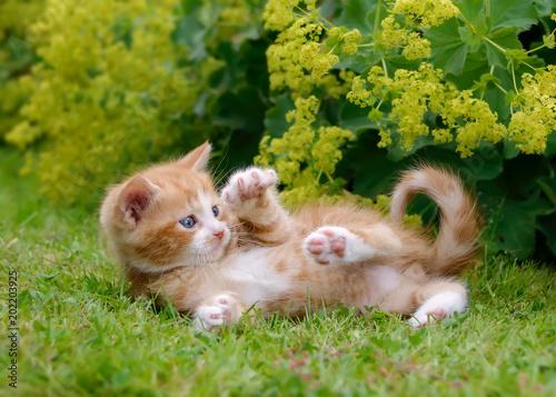 Cute kitten playing in a flowery garden