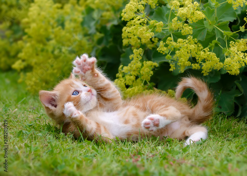 Fotobehang Kat Cute kitten playing in a flowery garden