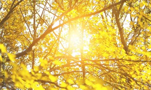 Fotobehang Oranje Autumn.