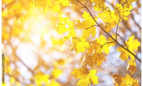 Plexiglas Geel Autumn.