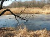 Grądy odrzańskie bezśnieżną zimą, Wrocław, Program Natura 2000