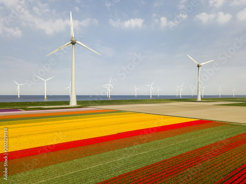 Fotobehang Tulpen Aerial view of tulip fields and wind turbines in the Noordoostpolder municipality, Flevoland