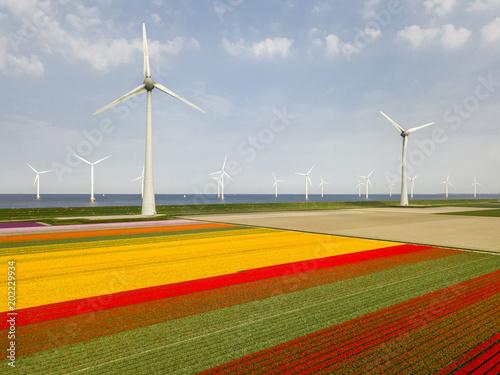 Plexiglas Tulpen Aerial view of tulip fields and wind turbines in the Noordoostpolder municipality, Flevoland