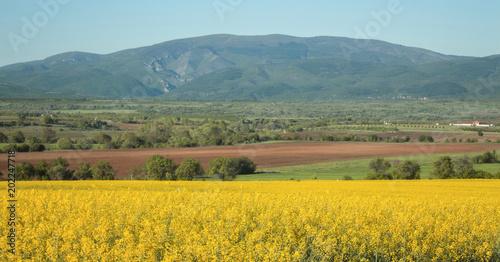 Fotobehang Oranje Landscape of Osogovo Mountain from rape field, Bulgaria.