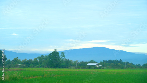 Plexiglas Rijstvelden Hut in rice field and big mountain with cloud on sky background.