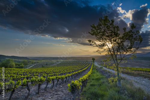 Fotobehang Wijngaard vignoble/vignoble avec coucher de soleil