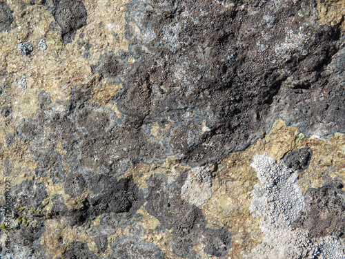 Canvas Stenen Rock stone surface texture. Old rough stone covered with lichen