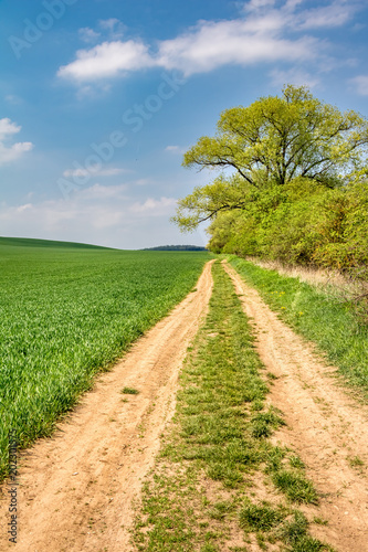 Wall mural Spring landscape with dirt road under blue sky