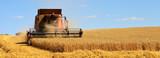 Récolte du blé dans les champs de France - 202308984