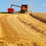Récolte du blé dans les champs de France - 202309352