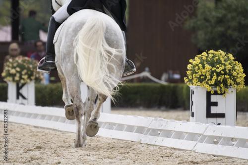 Plexiglas Paarden Doma Clasica