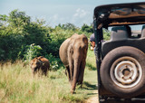 Elefants on safari in National Nature Park Udawalawe in Sri Lanka