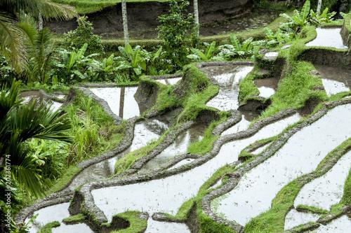 Plexiglas Rijstvelden Balinese rice terraces