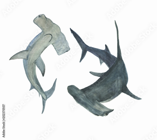 Watercolor painting hammerhead shark set © ramiia