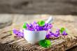 Produkte aus Veilchen - Viola; Duftveilchen; Blüten; Kräuter; Naturheilkunde; Medizin; Homöopathie;