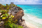 Iguana sitting at the beach of Tulum, Mexico - 202456733