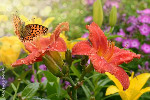 Schmetterling 468