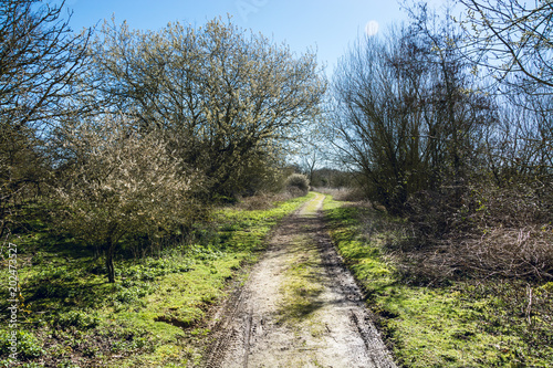 Narrow dirt road in rural area of UK countryside in early Spring on sunny day - Nature background