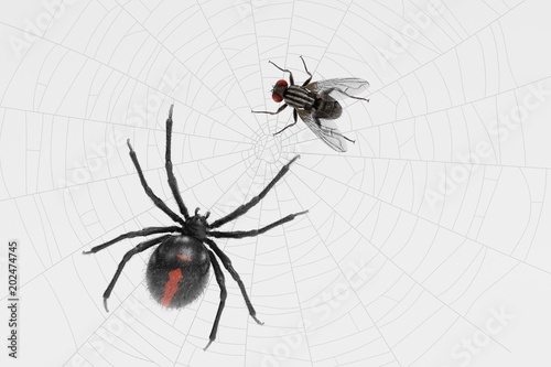 3D Render of Fly Trapped on Cobweb