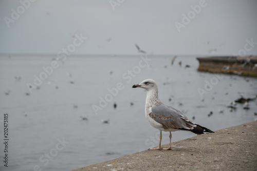 Seagull standing on the sea shore. Seagulls flying on the blue sky