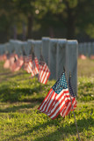 Veterans Cemetery with Flags - 202506930
