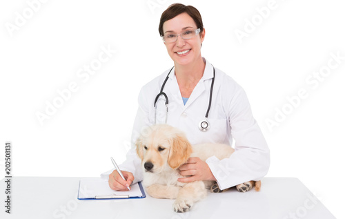 Fototapeta Smiling veterinarian examining a cute dog