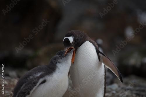 Fotobehang Pinguin Antarctica Penguins