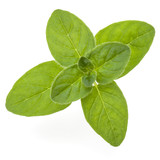 Oregano or marjoram leaves isolated on white background cutout - 202556361