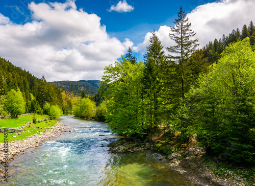Aluminium Bergrivier River flows among of a green forest at the foot of the mountain. Picturesque nature of rural area in Carpathians. Serene springtime day under blue sky with some clouds