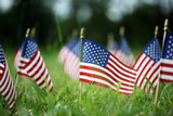 Group of American flags in green grass - 202580392