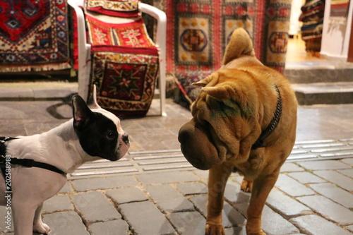Aluminium Franse bulldog dogs