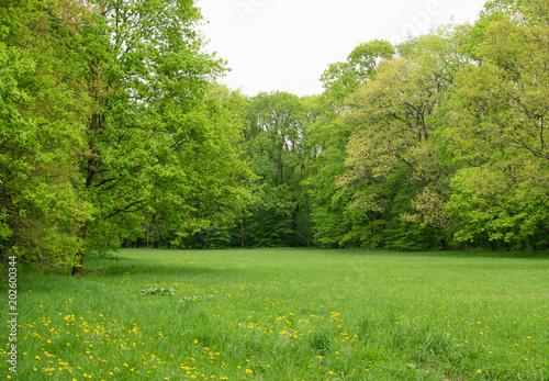 Plexiglas Lente Beautiful Spring Meadow