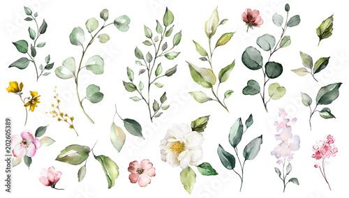 Duży zestaw elementów akwarela - kwiaty, zioła, liść. kolekcja ogrodu i dzikie, leśne zioła, kwiaty, gałęzie. ilustracja odizolowywająca na białym tle, egzotyczny liść. Botaniczny