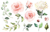 Set watercolor elements of roses, hydrangea.collection garden pink flowers, leaves, branches, Botanic  illustration isolated on white background.  bud of flowers - 202605718