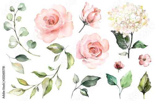 Leinwandbild Motiv Set watercolor elements of roses, hydrangea.collection garden pink flowers, leaves, branches, Botanic  illustration isolated on white background.  bud of flowers