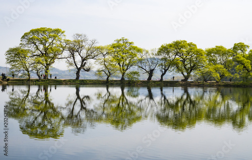 Foto Murales 버드나무와 복사꽃이 어우러진 호수의 풍경