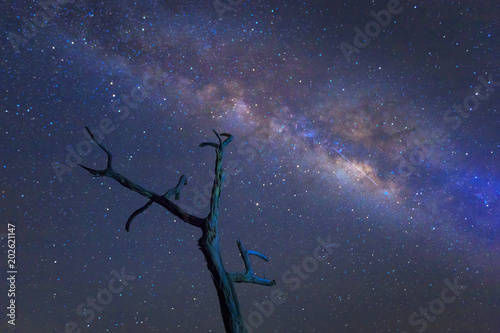 Plexiglas Heelal Milky way over dead tree. universe space shot of milky way galaxy with stars on a night sky background.