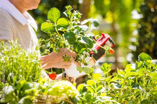 Fridge magnet Gartenarbeit und blumen Verkauf