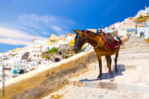 Plexiglas Santorini Donkey taxis in Santorini, Greece