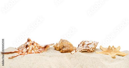 Fototapeta Pile of sand with seashells isolated on white.