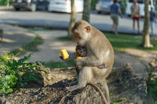 Plexiglas Aap Adult monkeys sits and eating food with monkey baby in the park.