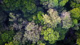 Rainforest. Aerial photo forest jungle