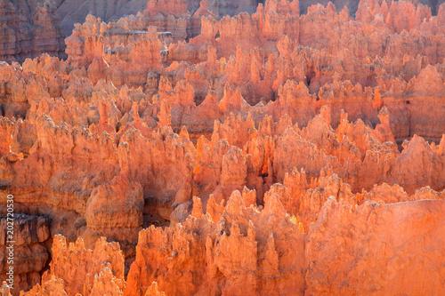 Fotobehang Koraal Bryce canyon