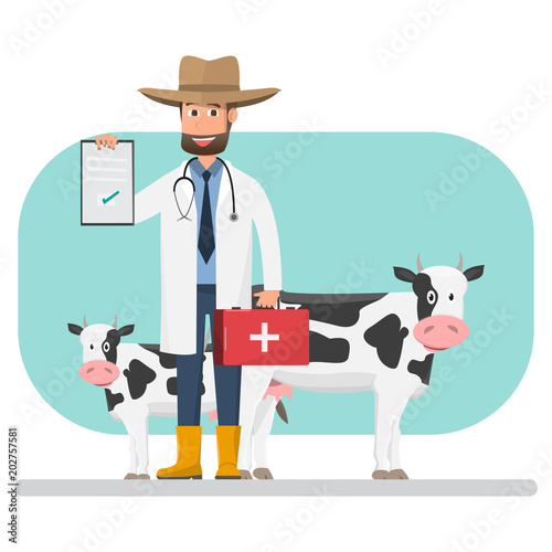 Fototapeta Cow veterinarian checking disease pets and animals inside farm.
