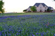 Large countryside home during spring time with Bluebonnet wildflowers blooming near the Texas Hill Country