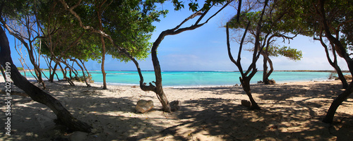 Fotobehang Tropical strand Turquoise waters and windswept trees of Baby Beach Aruba